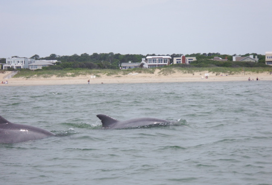 Kayak Nature Tours Virginia Beach Sea Kayaking Va Dolphin Trips All The Details
