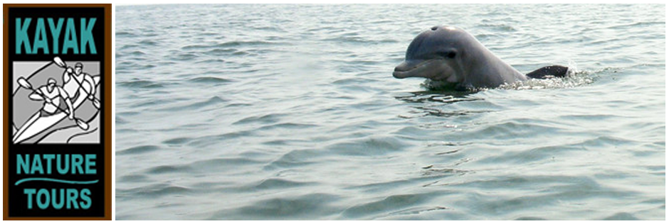Kayak Nature Tours Virginia Beach Sea Kayaking Va Dolphin Trips Home